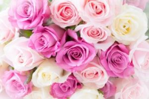 Rose birth